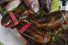 Fresh alive crab with strapped claws. And fish on metallic platter Royalty Free Stock Photography