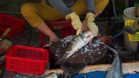 Fresh alive shark sell in local market,blinking eyes. Grey sharks on the plate in seafod market in Vietnam stock video footage