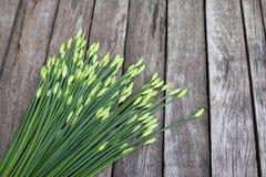 Fresh Allium tuberosum vegetables on wood background Royalty Free Stock Image