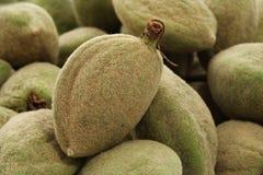 Fresh almond Stock Photos