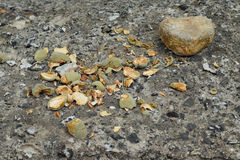 Fresh almond broken shells Royalty Free Stock Image
