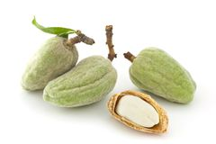 Fresh almonds. Some fresh almonds, isolated, almond nut, white background Royalty Free Stock Photography