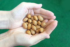Fresh Almonds in Hands Stock Photography