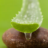 Fresh aloe leaf. With water drop Stock Images