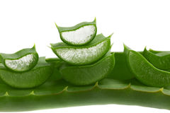 Fresh aloe vera leaf Royalty Free Stock Images