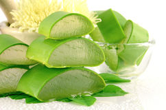 Fresh Aloe Vera. Stock Photos