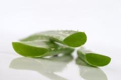 Fresh aloe vera leaves Royalty Free Stock Photography