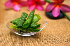 Fresh aloe vera leaves with plumeria. On brown jute background Royalty Free Stock Image
