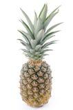 Fresh ananas Royalty Free Stock Photos