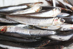 Fresh anchovies Royalty Free Stock Photo