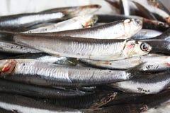 Fresh anchovies. Fresh and raw anchovies closeup Royalty Free Stock Photo