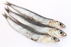 Fresh anchovies Royalty Free Stock Image