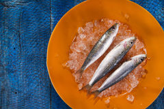 Fresh anchovies on a bed of ice Royalty Free Stock Photo