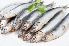 Fresh anchovies close up. Fresh anchovies with parsley in a dish close up Stock Images