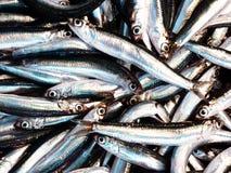 Fresh anchovies closeup Stock Photo