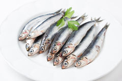 Fresh anchovies in a dish. Fresh anchovies with parsley in a dish Stock Image