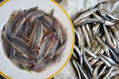 Raw anchovies fillets. Fresh anchovies fillets just cleared from the fishbones Stock Photo