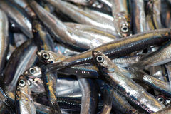 Fresh anchovies fish at the market. Fresh fish at the market close up detail Stock Photography