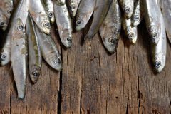 Fresh anchovies. Heap of small fresh anchovies Royalty Free Stock Photography