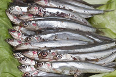 Fresh anchovies in the market. Stock Photos