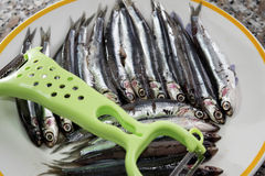 Fresh anchovies of market Stock Image
