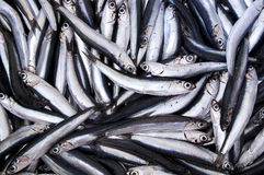 Fresh anchovies. From Mediterranean Sea Royalty Free Stock Photos