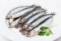 Fresh anchovies. With parsley in a dish Royalty Free Stock Photos