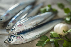 Fresh anchovies. Of raw paper Stock Photos