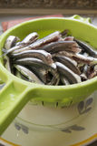 Fresh anchovies ready to be cooked. Raw anchovies just cleaned  in a green colander Stock Image