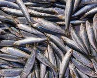 Fresh anchovies for sale, top view. Fresh anchovies close up top view for sale, sea food background Stock Photo