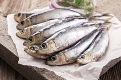 Fresh Anchovis Royalty Free Stock Photography