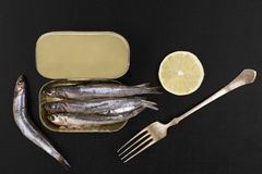 Fresh anchovy fish in can. Royalty Free Stock Image