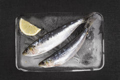 Fresh anchovy fish on ice. Stock Photography