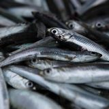 Fresh Anchovy / Sardines. On the marketplace Royalty Free Stock Image