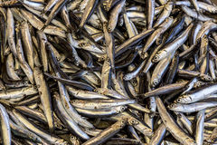 Fresh anchovy. Fresh and tasty anchovy on the fish market Stock Photo
