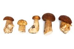 Fresh And Beautiful Mushrooms Royalty Free Stock Photos