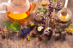 Fresh And Dried Medicinal Herbs And Herbal Tea Stock Photo