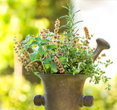 Fresh And Dry Herbs - Spices Royalty Free Stock Image
