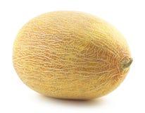 Fresh appetizing melon Stock Image