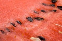 Fresh appetizing water-melon Stock Photo