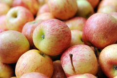 Fresh Apple Stock Images