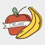 Fresh apple and banana organ fruits with ribbon. Vector illustration Royalty Free Stock Images