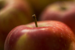 Fresh apple closeup Stock Photography