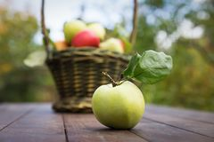 Fresh apple crop outdoors Stock Photography
