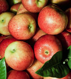 Fresh apple from the farm Stock Image
