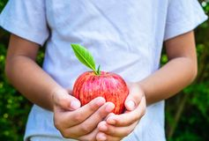 Fresh apple fruit in hand boy . love natural royalty free stock photos