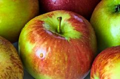 Fresh apple red and green Stock Photos
