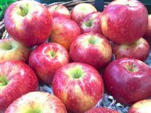 Fresh apple. Fresh red apple in the market Stock Photos