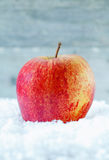 Fresh apple in winter snow Stock Photography