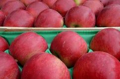 Fresh apples Stock Photography